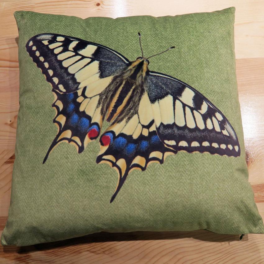 kis_butterfly
