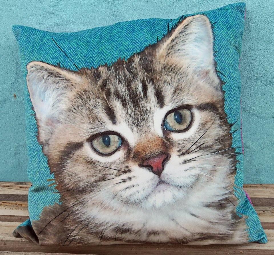 Kitten cushion front