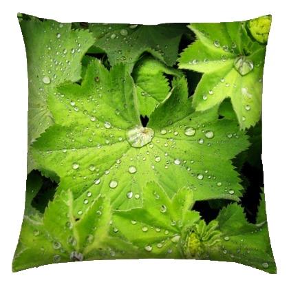 kis_leaf-water-drop-1