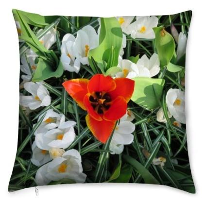 kis_red_tulip_white_crocus-1