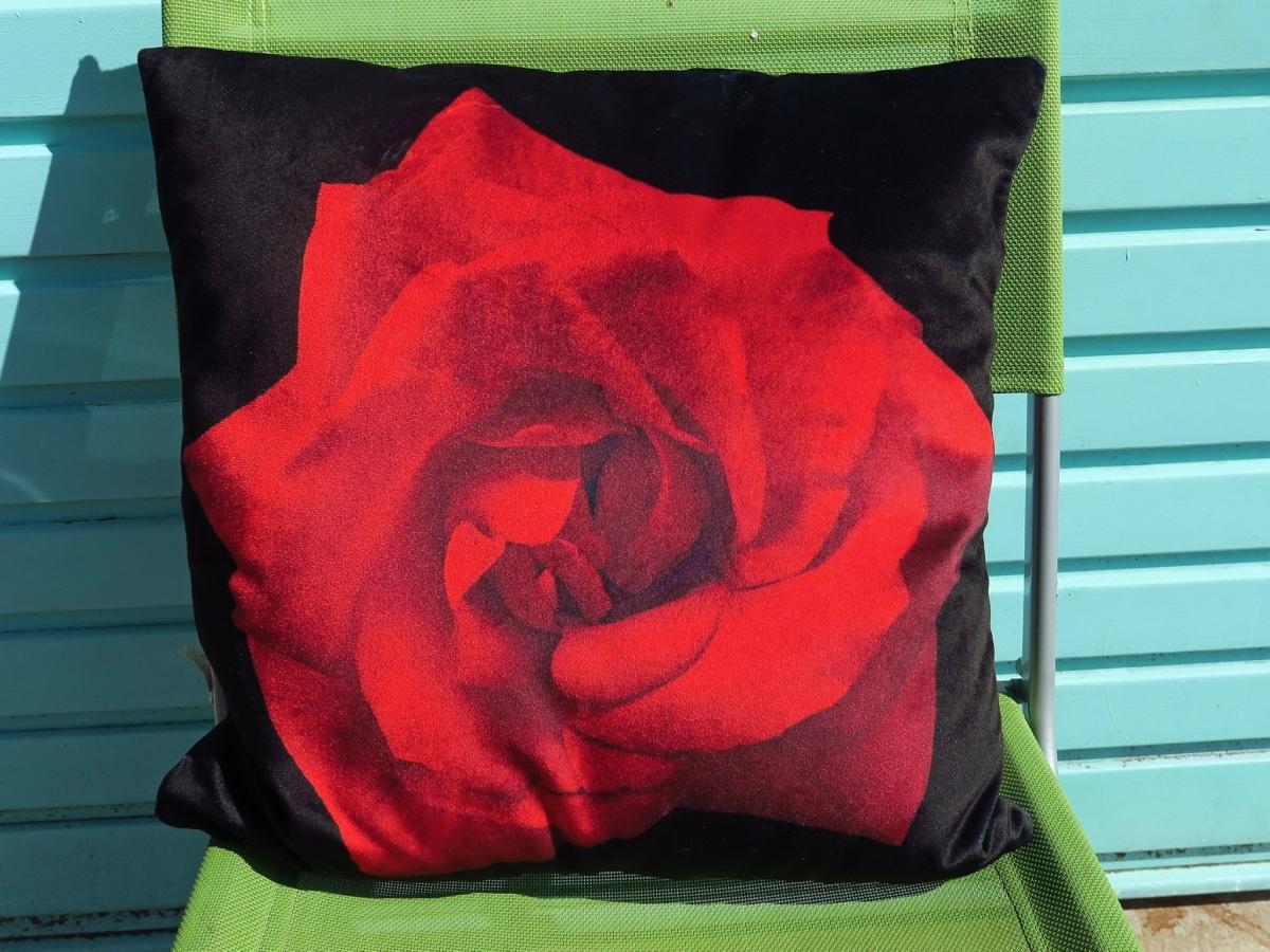 red_rose-1