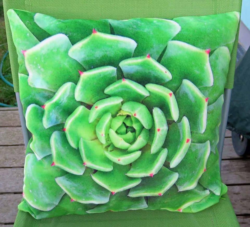 succulente_velvet-1