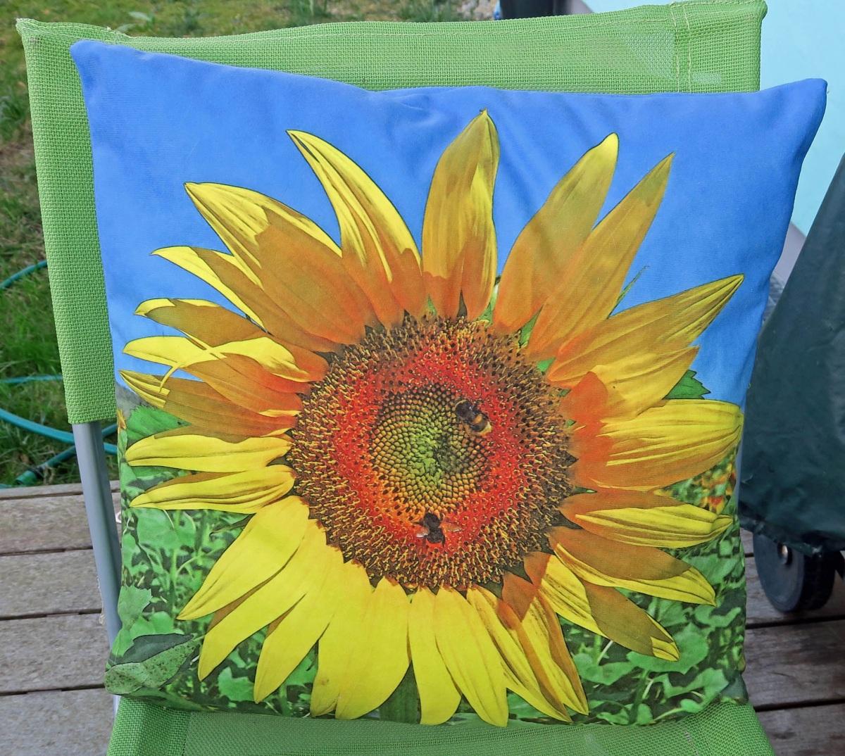 sunflower_098-1