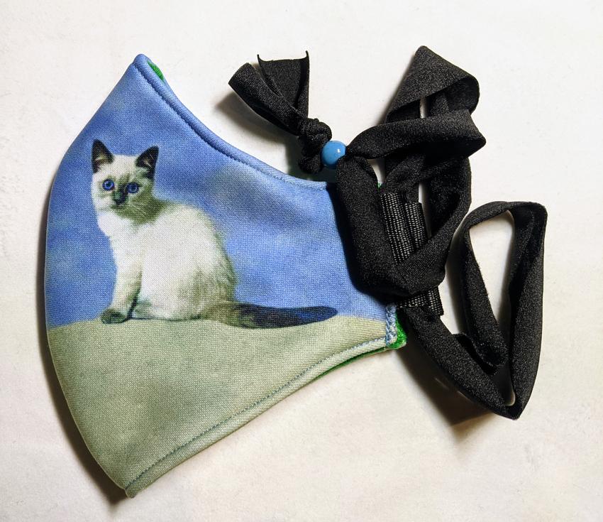 2f_blue_eyed_kitten
